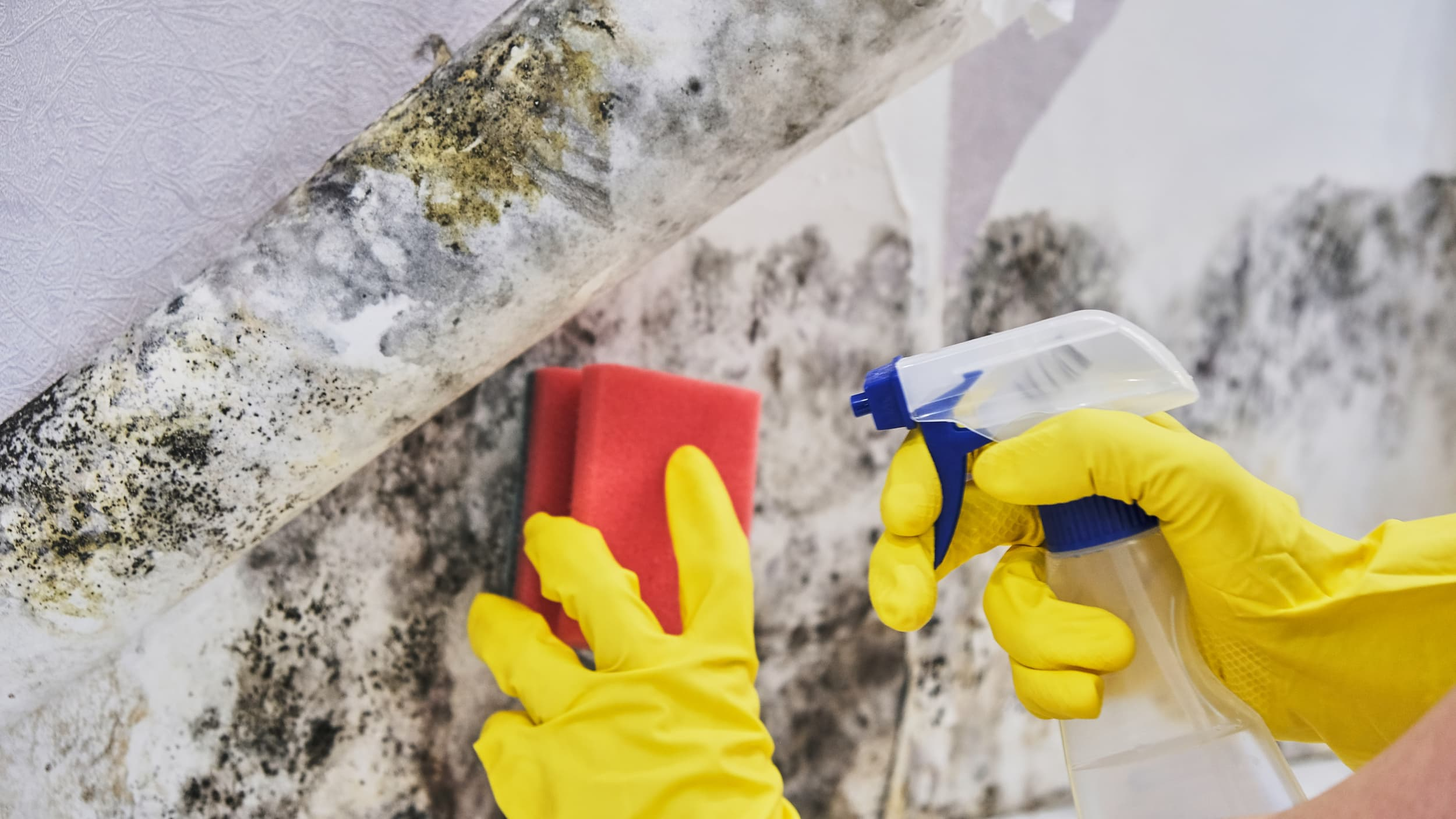 Compliance Training Online Mold Prevention, Remediation & Removal course